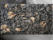 petrified wood black 1